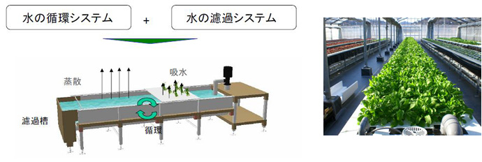 hydroponic-culture