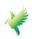 title_bird